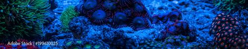 Photo  Reef tank, marine aquarium full of fishes and plants