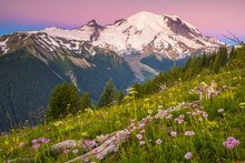 Snowcapped Mount Rainier With Beautiful Wildflowers In Foreground