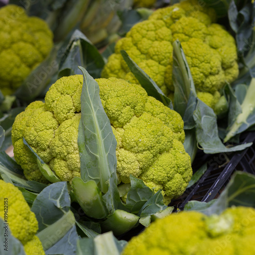 Fotografie, Obraz  Broccoflowers or green cauliflowers
