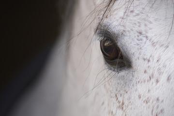 El ojo de un caballo español