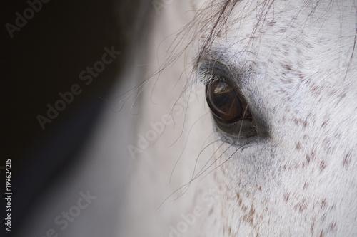 Stampa su Tela El ojo de un caballo español