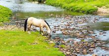 Cavalo Bebendo água No Rio