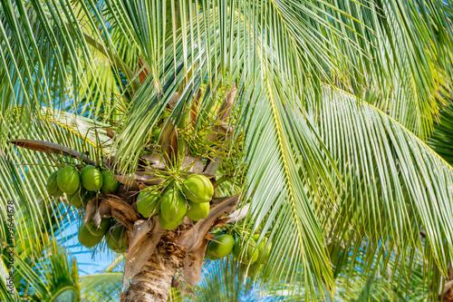Palmera con cocos en el mar caribe Fotobehang