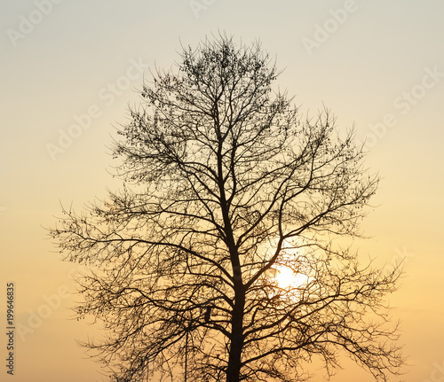 Foto op Canvas Texas Silhouette of tree on sunset.