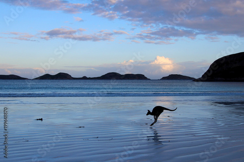 Fotobehang Kangoeroe Lucky Bay Australia