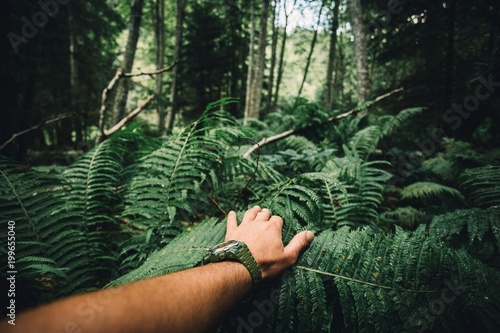 Fototapeta Close up of explorer male hand in green rainy forest
