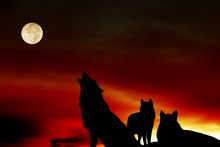 Pack Of Wolves With Full Moon ...