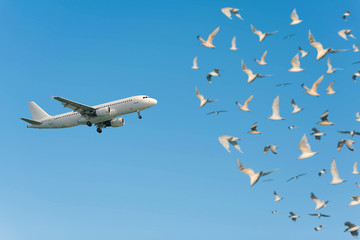 A lot of gulls and a plane taking off against the blue sky. The concept