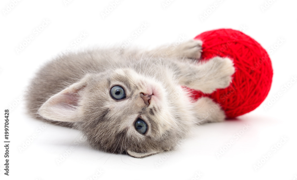 Kitten with ball of yarn.