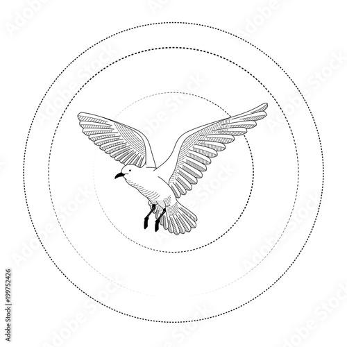 Bird Flying Illustration Vector Hand Drawing Line Art Of Animal
