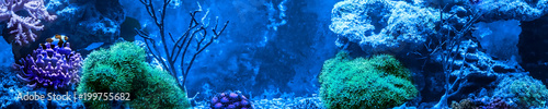 Poster Sous-marin Reef tank, marine aquarium full of fishes and plants. Horizontal photo banner for website header. Tank filled with water for keeping live underwater animals.