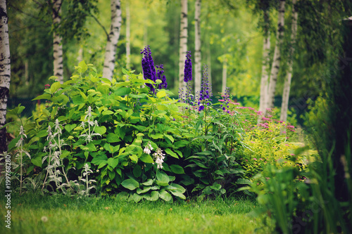 Slika na platnu mixed perennial border with hostas, spirea japonica, delphinium and other perenn