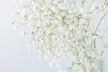 Background With Tiny White Flowers (gypsophila Paniculata)