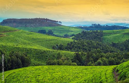 Türaufkleber Afrika Landschaft in Afrika, Ruanda