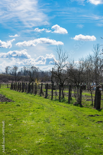 Poster Blauw View of a garden on a farm in spring with fresh grass and a tree blooming with bright yellow flowers on a sunny day
