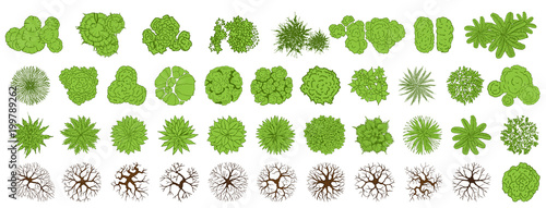 Door stickers White Trees top view for landscape vector illustration.