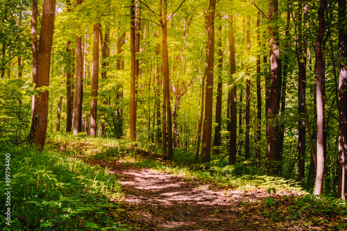 Recess Fitting Panorama Photos Road in a sunny summer forest