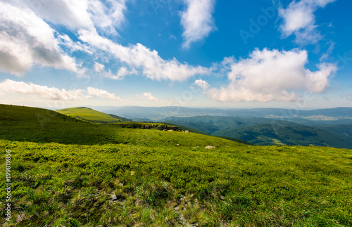 Foto auf AluDibond Gebirge grassy hillside meadow in the morning. mountain peak in the distance under the blue sky with fast moving clouds