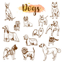 Hand Drawn Dogs Breeds Set. Sk...