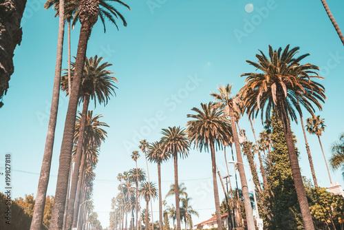 Exotic palm trees in bervely hills, Los Angeles Tapéta, Fotótapéta