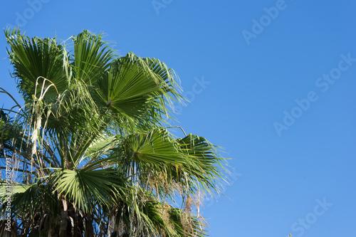 Foto op Plexiglas Palm boom Palm tree leaves