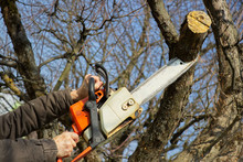 Man Cutting Branch Tree Using Chainsaw