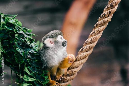 Funny little mokeys subspecies in european zoo Canvas Print