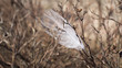 Lonely feather in branches of a bush. Poetic symbol of loneliness. The concept of struggling with creativity and realism