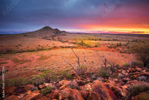 Canvas Prints Coral Desert Glory
