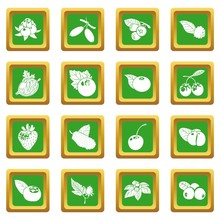 Berries Icons Set Green Square...