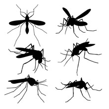 Closeup Mosquito Silhouettes Isolated. Flying Macro Mosquitoes Vector Set
