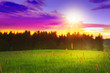 Spring sunset over the green field.