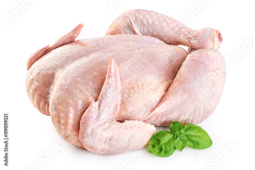 Fresh raw chicken and basil isolated on white background. Fototapeta