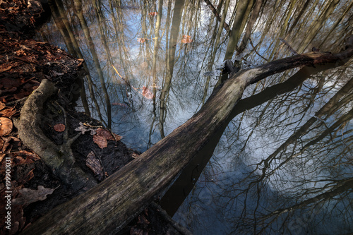 Photo  A trunk covering a small lake in the Stadtwald of Bottrop