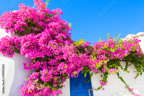 White building with blue door and pink flowers.