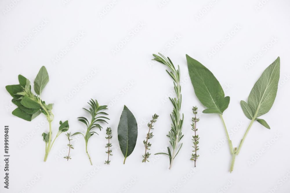 Fototapety, obrazy: Assorted sprigs of fresh herbs displayed as a border on white with sage, basil, thyme, rosemary , oregano and laurel with copy space above