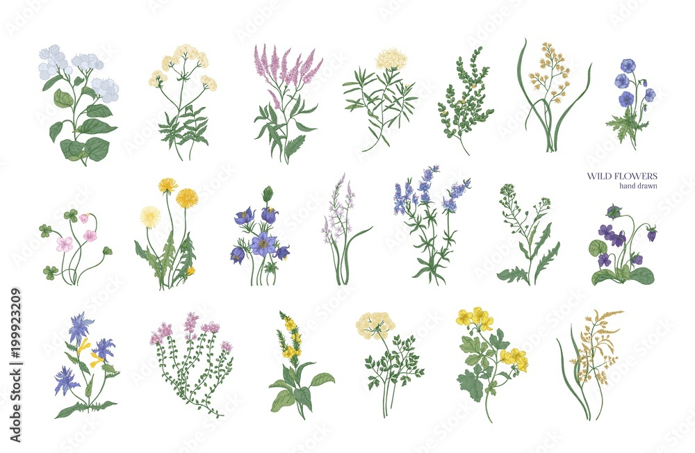 Fototapety, obrazy: Collection of detailed drawings of different botanical flowers and decorative flowering plants isolated on white background. Bundle of elegant floral decorations. Colorful realistic vector