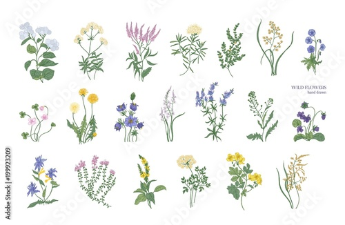 Collection of detailed drawings of different botanical flowers and decorative flowering plants isolated on white background Fototapeta