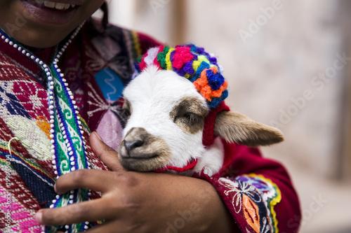 Poster Lama Cute little girl from Cusco, Peru