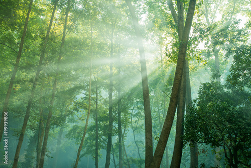 Foto auf AluDibond Olivgrun forest trees. nature green wood with sunlight