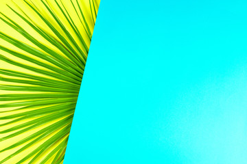 Tropical palm leaf with colorful background.