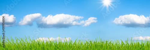 Spoed Foto op Canvas Natuur wiese vor blauem himmel