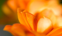 A Small Orange Flower As A Background