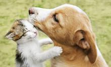 The Kitten Hugs The Dog