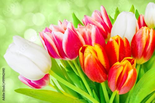 Fotomagnes Tulipany