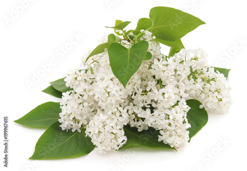 Photo sur Toile Lilac Many white flowers.