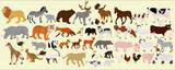 Fototapeta Fototapety na ścianę do pokoju dziecięcego - A collection of different farm animals, African and Australian on a light background