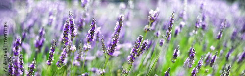 Photo  Provence nature background