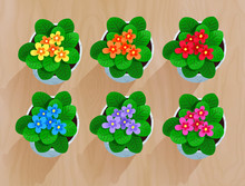 Top View Vector Collection Of Flowers In Pot