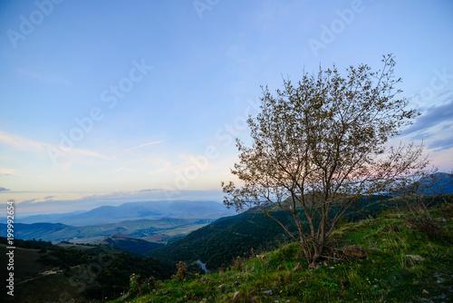 Deurstickers Blauwe hemel Beautiful landscape with alone tree, Armenia